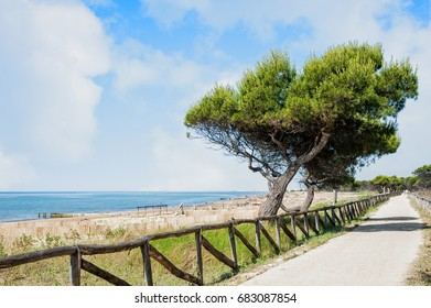 Landscape with sea, beach, sea pine, cycling path and foot path on blue sky with clouds. Bibione Italy