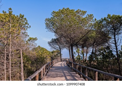 Landscape with sea pine, cycling path and foot path on blue sky with clouds. Bibione Italy.