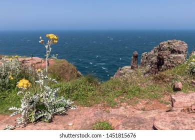 landscape of sea and rocks with yellow flower in the foreground Ploumanach - Perros-Guirec Bretagne France