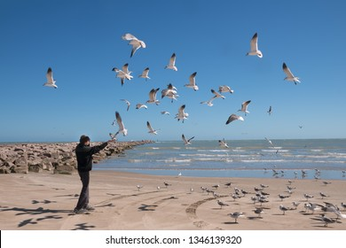 Landscape with the sea and a teenager who feeds flying seagulls. Texas Coast, Gulf of Mexico, USA