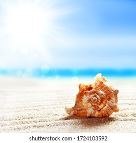 Landscape with seashell on tropical beach. Summer concept.