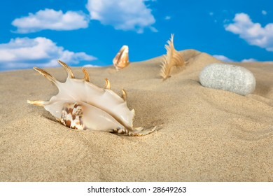 Landscape with seashell and stones on sky background