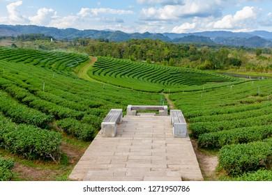 landscape seatfront of  tea field in north Thailand