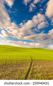 Landscape of the setting sun, green field and blue cloudy sky