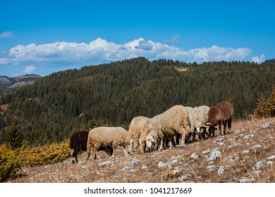 Landscape with sheep grazing on the mountainside, Trigrad, Bulgaria