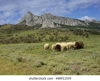Landscape with Sheep in the mountains