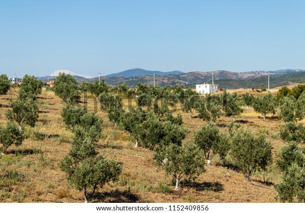a landscape shoot from farm with short green plants with distant building. photo has taken from izmi/turkey.