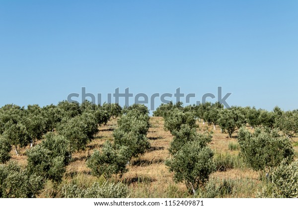 a landscape shoot from farm with short green plants. photo has taken from countryside of izmir.