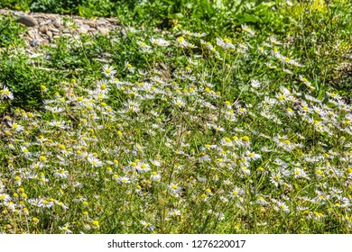 Landscape shot - meadow in summer with beautiful plants