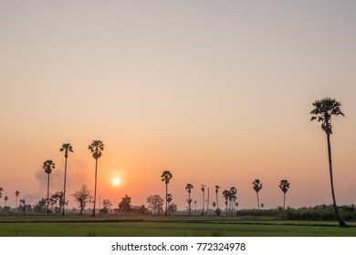 Landscape silhouette palm tree with colorful sunset along farm