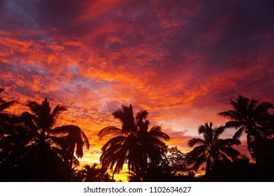 Landscape silhouette of palm trees against a dramatic sunrise in cloudy sky of purple, red, and orange. Shot in Rarotonga, Cook Islands, South Pacific.