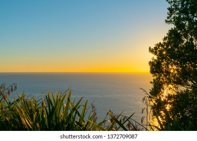 Landscape silhouette at sunrise from Mount Maunganui through flax and trees across ocean to horizon.