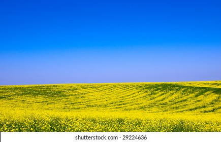 landscape with sky, field and flowers