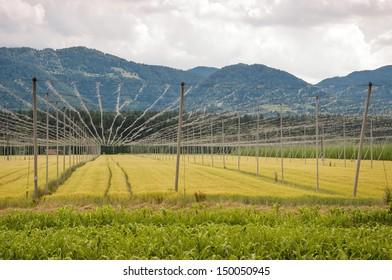Landscape Slovenia.