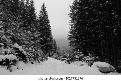 Landscape at snow road in dense forest in dusk. Winter landscape at road with white deep snow in dark dense spruce forest in evening dusk. Misty light sky. Black and white.