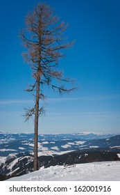 Landscape of snowy mountains in winter with lonely tree in foreground.Koralpen,Austria.