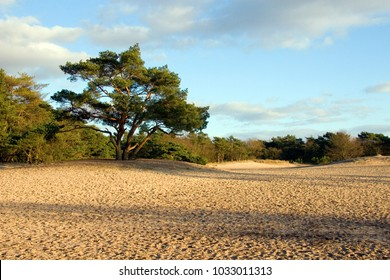 "Landscape ""Soesterduinen"", the Netherlands:  a beautiful sky with clouds, a tree and sand dunes on a sunny day."