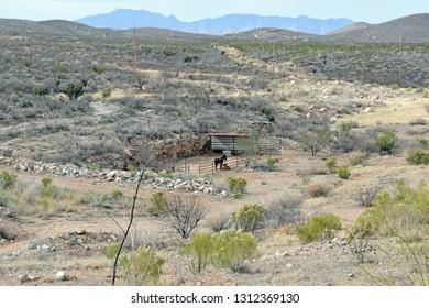 Landscape in South Arizona with burro
