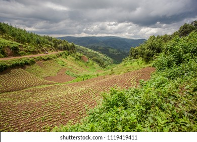 Landscape in southwestern Uganda, at the Bwindi Impenetrable Forest National Park, at the borders of Uganda, Congo and Rwanda. The Bwindi National Park is the home of the mountain gorillas