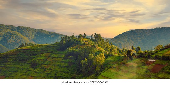 Landscape in southwestern Uganda, at the Bwindi Impenetrable Forest National Park, at the borders of Uganda, Congo and Rwanda. The Bwindi National Park is the home of the mountain gorillas.