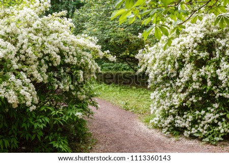 Landscape Spring Garden Flowering Shrubs Path Stock Photo Edit Now