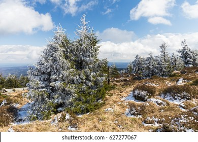 Landscape with spruces at the Brocken (mountain) in the Harz mountains in April, partly covered with snow