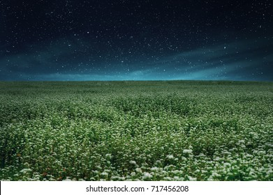 landscape of starry night with beautiful buckwheat fields