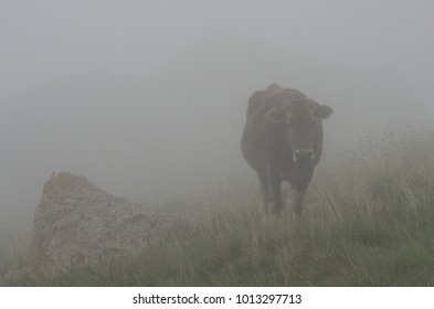 A landscape with a stone and acow in the fog, Erydag, Dagestan, Russia