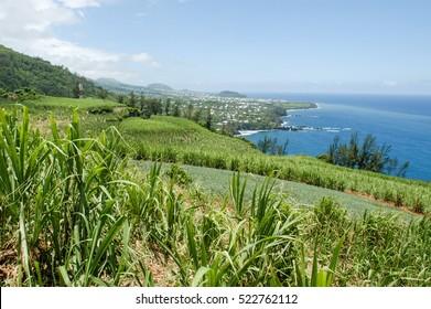 Landscape of sugar cane field on the coast of La Reunion island, France