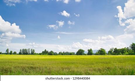 landscape farmland in summer day