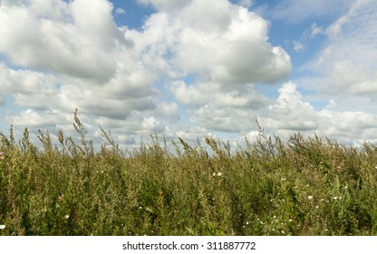 landscape summer meadow on a background of clouds