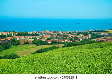 Landscape with sunflowers field and small town on the sea coast. Ancona, Italy