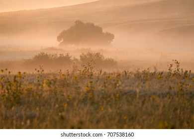 landscape with sunflowers in the light of the rising sun, USA