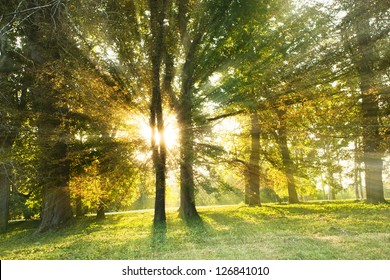 Landscape with sunny forest in early morning  sun lights