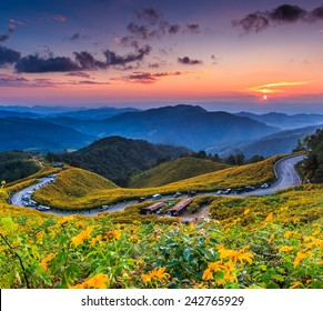 Landscape sunset nature flower Tung Bua Tong Mexican sunflower in Maehongson Province, Thailand.