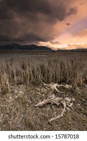 Landscape at sunset with skeletons