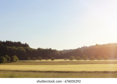 Landscape Sunset. Summer Wheat Field and Trees.