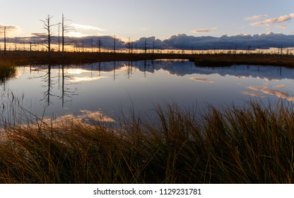 Landscape in the swamp. Sunset, lake, grass, dry trees