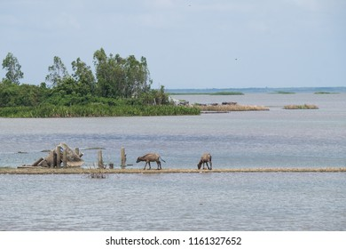 Landscape of Ta-lay Noi wetlands preserve, one of the famous attraction in Phattalung district, Thailand.