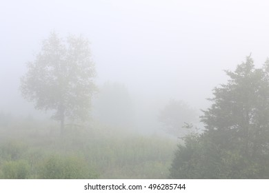Landscape Of Tall Green Trees And Low Shrubs And Bushes Growing In Overgrown Pasture Field Covered In Heavy Morning Fog On A Farm in The Mountains Of South West Virginia