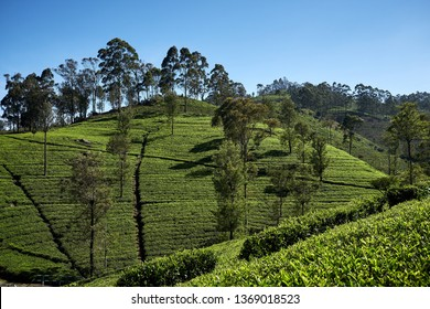 Agricultural Technology India Images, Stock Photos & Vectors