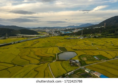Landscape terraced rice field high angle view in south korea.