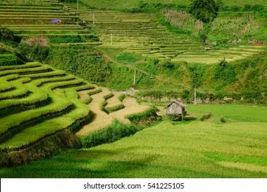 Landscape of terraced rice fields in Mu Cang Chai, Northern Vietnam. The average altitude of Mu Cang Chai is about 1000 meters above sea level.