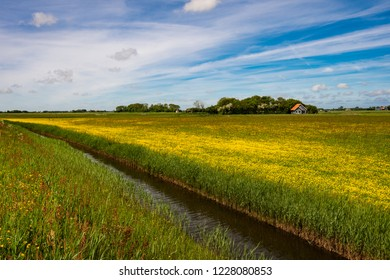 landscape in Texel with yellow flowering crowfoot field and canal - Netherlands Holland