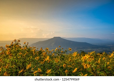Landscape Thailand beautiful mountain scenery view on hill with tree marigold flower field - yelllow flower on mountain and sunset / phupapoh - phu pa poh , Loei or Fuji of Thailand