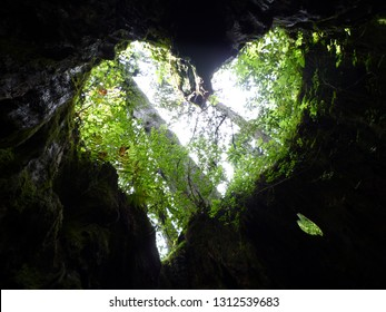 A landscape that looks like a heart-shaped looked up from the bottom of Wilson shares  in yakushima Japan Jun 25th 2010