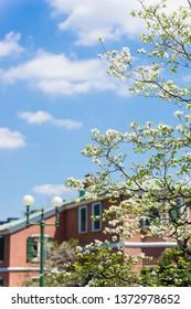 Landscape of Tokyo Daikanyama in spring