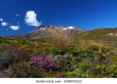 Landscape in the Tongariro National Park, new zealand on the north island with a view to Mount Ruapehu. The park is one of only 35 sites in the world heritage and unesco world heritage.