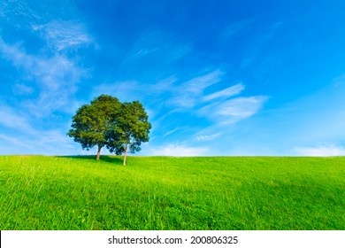 Landscape tree in clear green and blue nature