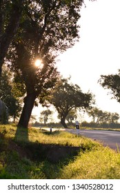 Landscape with tree near the road in morning sunrise light.